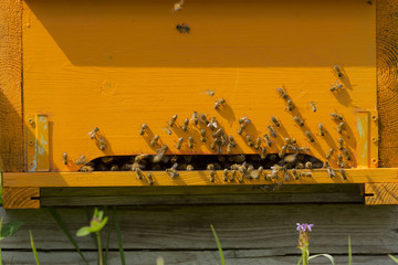 Hives with bees