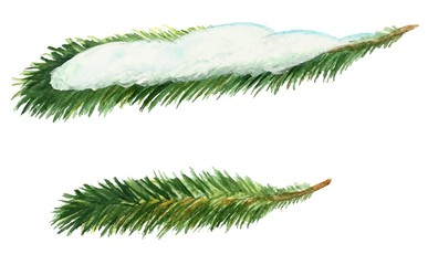 watercolor fir branch covered with snow, vector illustration