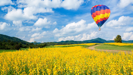 Hot air balloon over yellow flower fields and blue sky backgroun