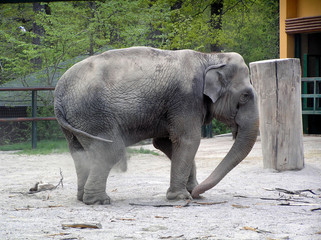 Elephant in Zagreb zoo
