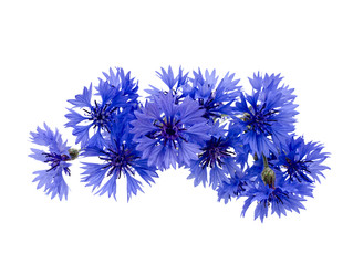 bouquet of cornflowers