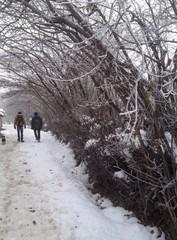 fındık bağlarında kış gezileri
