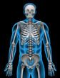 A man's skeleton system