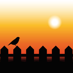 Bird Silhouette on a fence in sunset