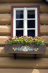 Blumenfenster, Stiefmuetterchen