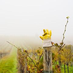 Gelber Handschuh im Weingarten