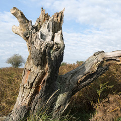 Tree stump in a dune landscape.