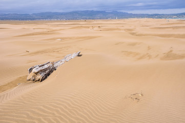 Sand dunes in Punta del Fangar (Ebro Delta, Spain)