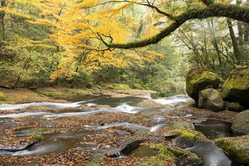 紅葉と菊池渓谷の流れ