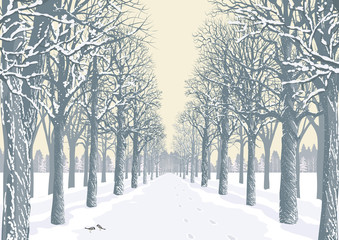 Alley with snowy trees silhouettes in a park