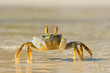 Leinwanddruck Bild - Ghost crab on beach
