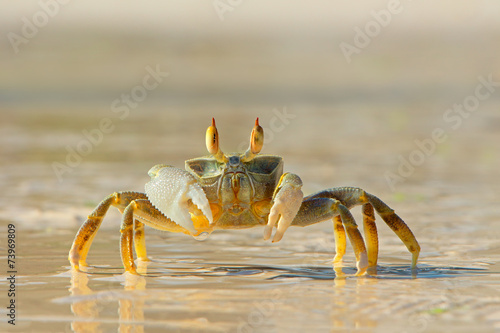Leinwanddruck Bild Ghost crab on beach