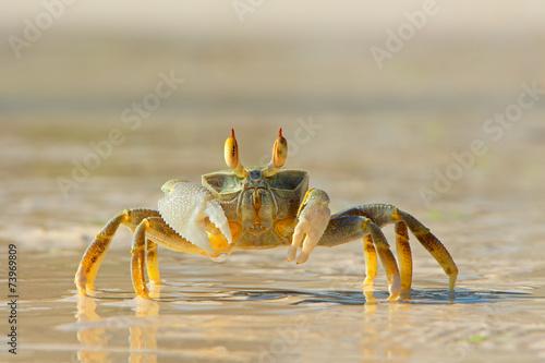 Ghost crab on beach - 73969809