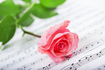 Rose with musical symbols