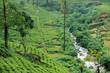 Tea plantation highlands