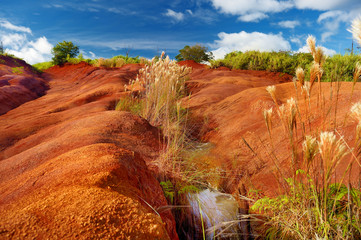 Famous red dirt of Waimea Canyon in Kauai