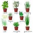 herbs in pots - 73975094