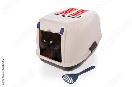 kitty dri cat litter