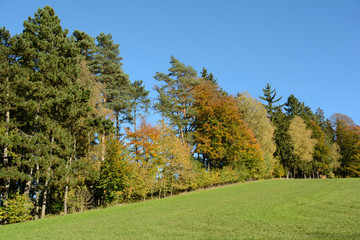 leuchtend bunter Herbstwald