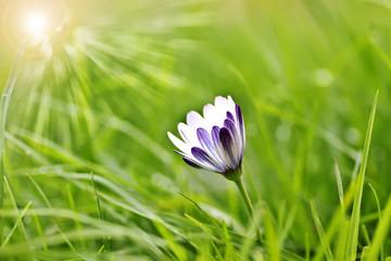 flor solitaria entre la hierba