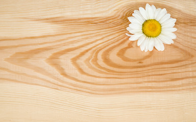 Wooden background with camomile