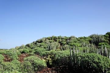 Nationalpark Malpais de Rasca