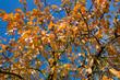 canvas print picture - Laubbaum im Herbst
