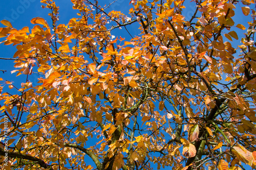 canvas print picture Laubbaum im Herbst