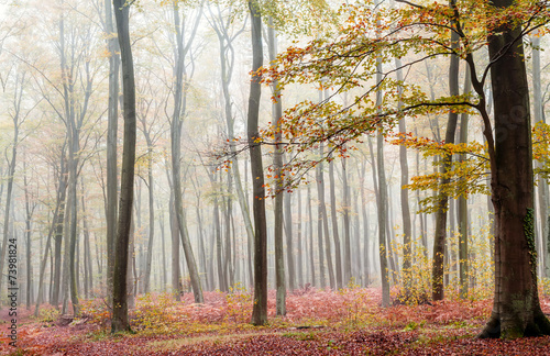 forest © danimages