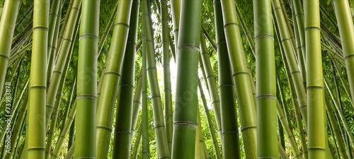 Fotobehang Bamboe Bamboo Jungle