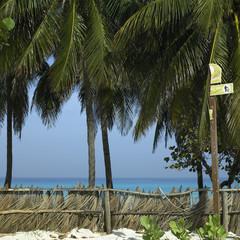 Palm tree beach fence