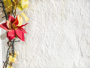 red flower with yellow leaves on a white wall