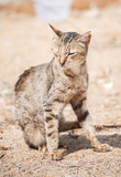 Portrait of dirty stray feral cat outdoors. poster