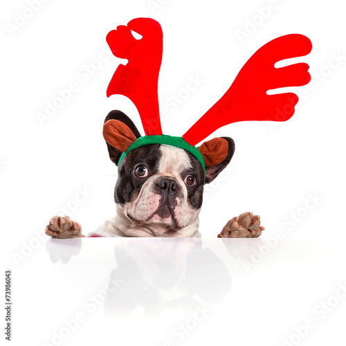 canvas print picture French bulldog dressed as reindeer Rudolph over white