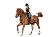 Brunette woman cantering on chestnut horse isolated on white - 73986274