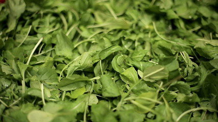 Green leaves of arugula. Medium shot. Dolly shot