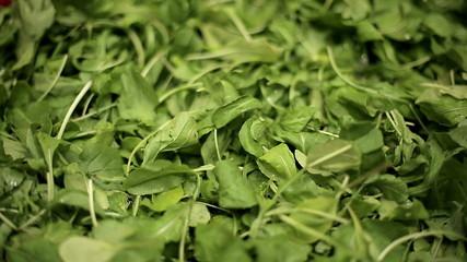 Green leaves of arugula. Medium shot. Dolly shot