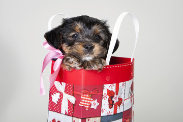 Puppy in gift bag 2