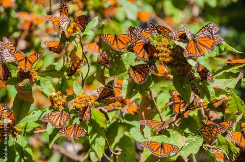 Reserva de Biosfera de Mariposa Monarca, Michoacán (México)