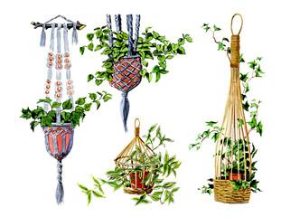 Basket mounting. Botany
