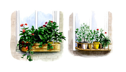 Location of indoor plants outside the window in the summer.