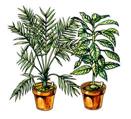 Houseplant. Botany