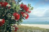 Fototapety Pohutukawa trees red fowers sandy beach