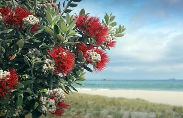 Pohutukawa trees red fowers sandy beach