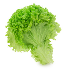 lettuce leaves isolated on the white background