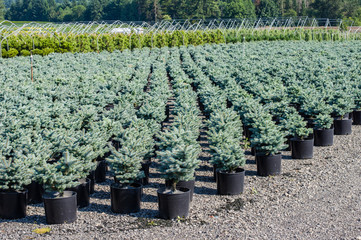 Rows of potter nursery planst