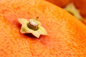 grapefruit stem