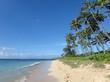 Coconut Trees line Kahala Beach