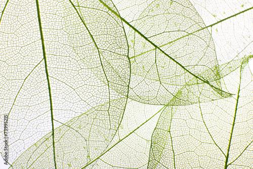 Decorative skeleton leaves background - 73995215
