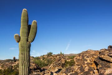 Cactus Arizona Desert